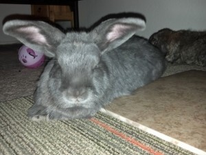 Clover in front of her husbun, Furrgus.