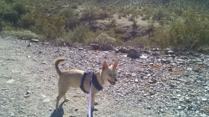 While in Phoenix, my Desert Dog and I explored the land at Dreamy Draw park. Birds and lizards and more, oh my! ;-)