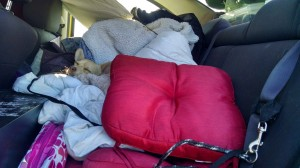 This dog can sleep anywhere! No need to make the need or in this case neaten up the back seat. My Chi-ROCK-Wah is good to go! Zzzzzz