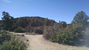 Hiking trail in Prescott, Arizona surrounded by trees.