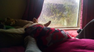 "Enjoying a rainy day in ""sunny"" Arizona with my skilled napping buddy. ;-)"